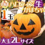 ハロウィン用かぼちゃの通販販売サイトを紹介!食べられるけど美味しくない?