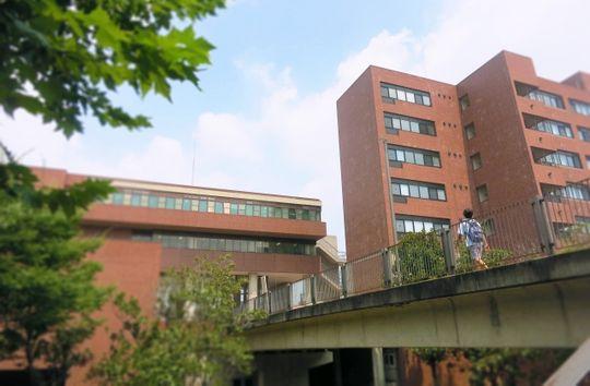 東洋 大学 偏差 値