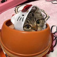 【ちょりチャンネル】猫の口の下牙を放置している理由は?
