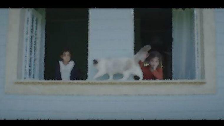YKK APのCM出演の猫の種類は?BGM曲名も調査!