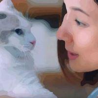 ソフィーナCMの猫の種類は?吉田羊出演のハリ美容液篇